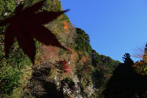 2m Colored Leaves 2010(3) P1020098-2-c.jpg