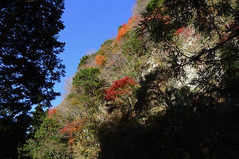 6m Colored Leaves 2010(3) P1020095-2.jpg