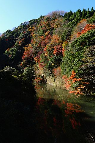 8m Colored Leaves 2010(5)  P1020135-2-c.jpg