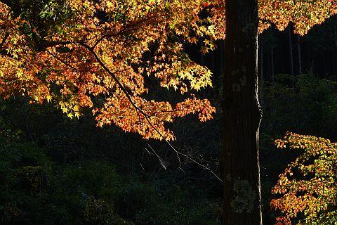 Colored Leaves 2010 1-4m P1010316-2.jpg