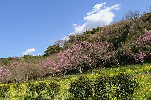 春色のページから 2m P1020502-2.jpg