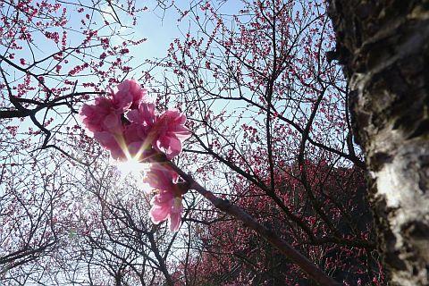 春色のページから 5m P1020515-2.jpg