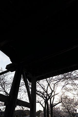 桜花通信 2011 8m DSC_7478-2-c.jpg