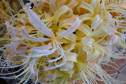 秋めく花里へ1-7m P1000541-2.jpg