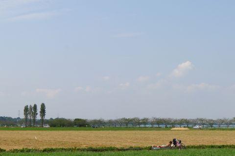 風車と秋桜 3 fbcd1e8f.jpg