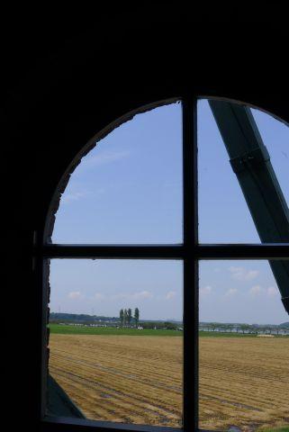 風車と秋桜 6 a9252f35.jpg