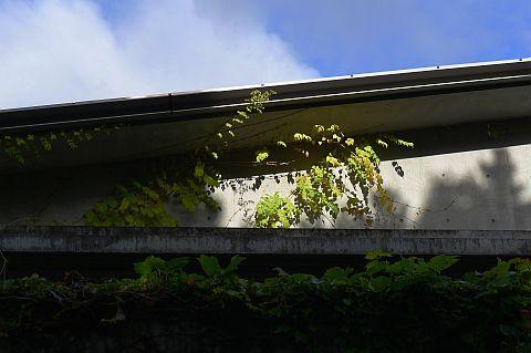 1-5m 脇庭ボーダーガーデン P1010120-2-c.jpg