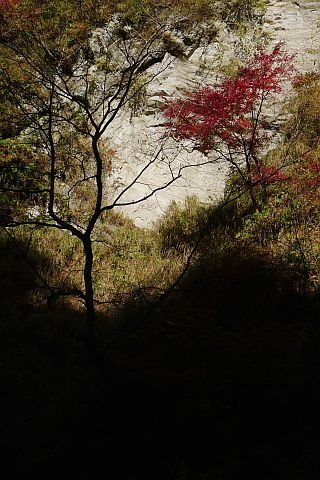 1m Colored Leaves 2010(3) P1020111-2.jpg
