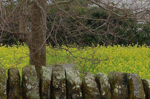 3m シェイクスピアの贈りもの 春 2011 P1020391-2-c.jpg