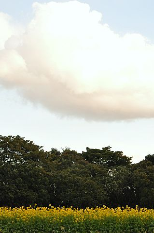 4m 冬空の稲毛海岸 DSC_6137-2-c.jpg