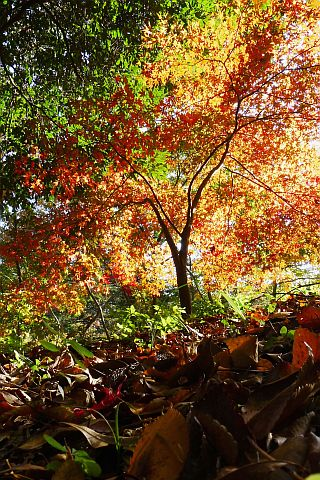 Colored Leaves 2010 1-1m P1010369-2-c.jpg