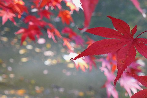Colored Leaves 2010 1-2m P1010381-2-c.jpg