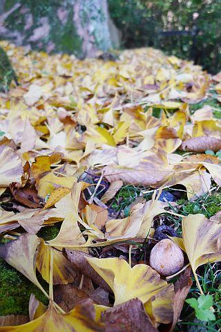 Colored Leaves 2010 1-5m P1010366-2-c.jpg