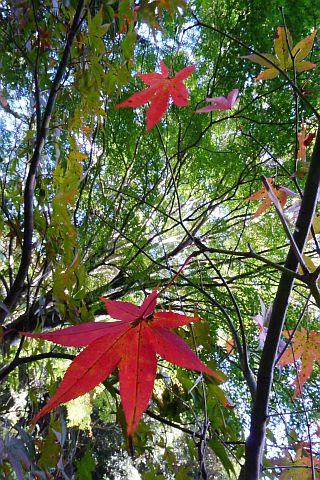 Colored Leaves 2010 2-4m P1010323-2-c.jpg