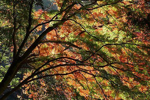 Colored Leaves 2010 2-5m P1010326-2-c.jpg