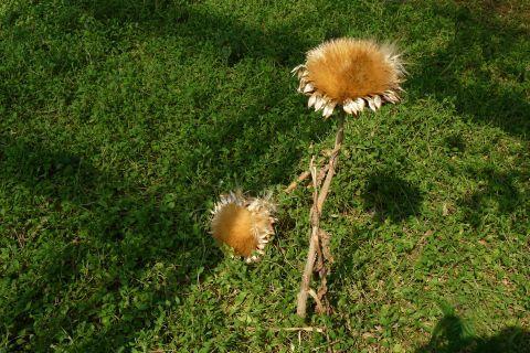ベジタブルガーデン autumn 2010 8 5ff268c6.jpg