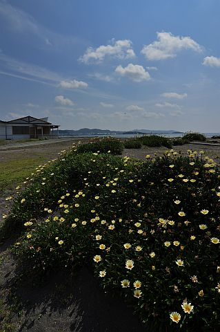 初夏のビーチにて 2-8 e5739e96.jpg