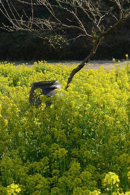 春色のページから 1L P1020497-2.jpg