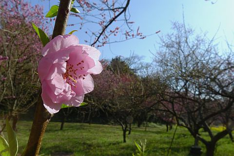 春色のページから 3m P1020514-2.jpg