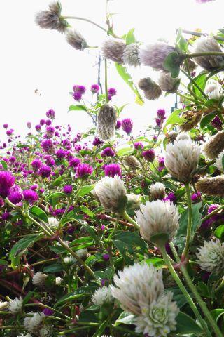秋めく花里へ1-1m P1000523-2-c.jpg