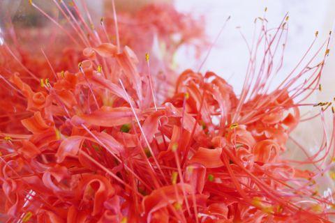秋めく花里へ1-3m P1000538-2.jpg